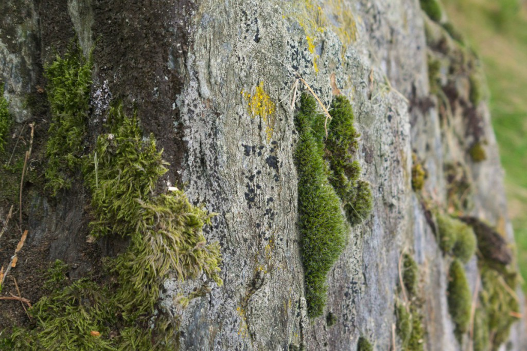 Moss and tombstones, Glendalough