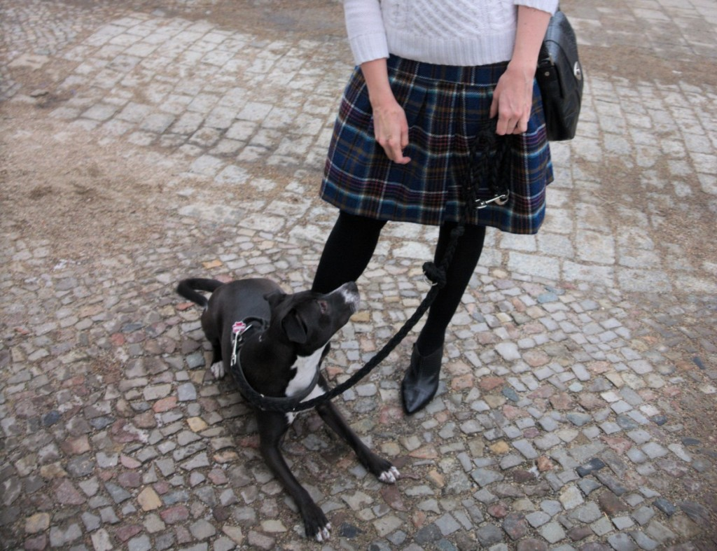 Boden British Tartan Skirt and Basenji Mix