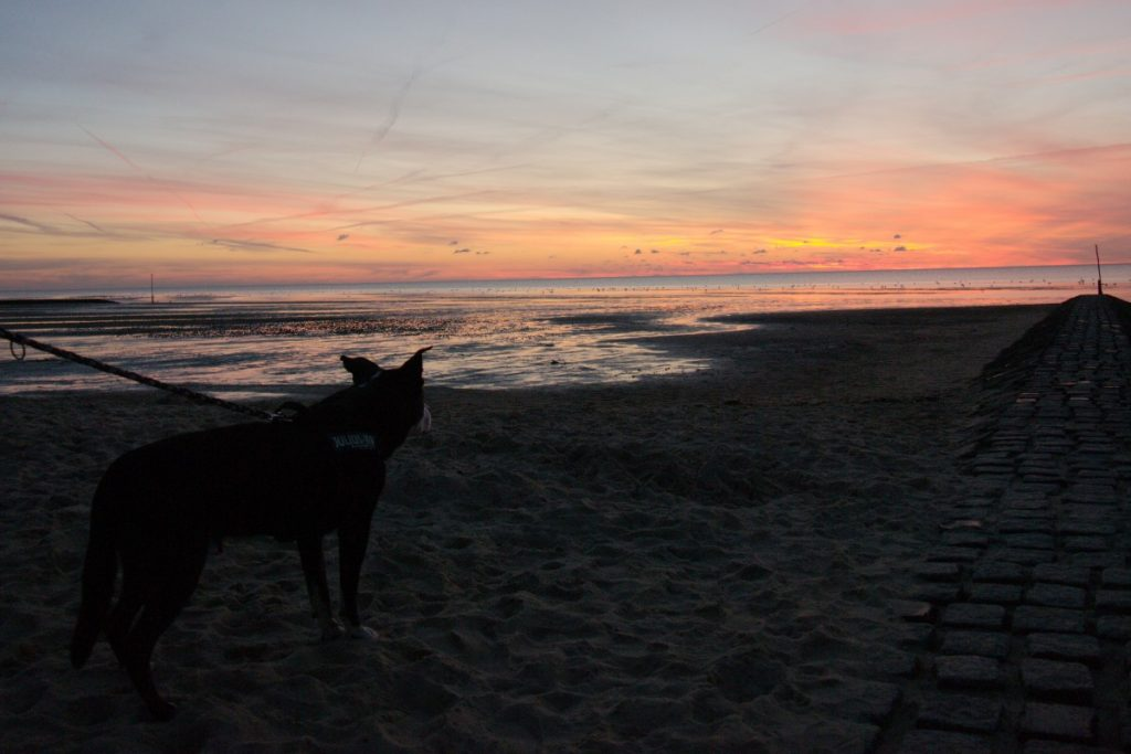 dog at sunset over the Wattenmeer
