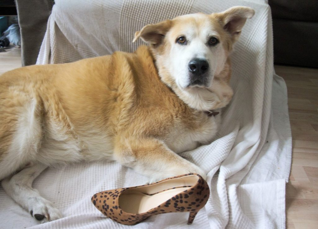 Akita and high heel pumps