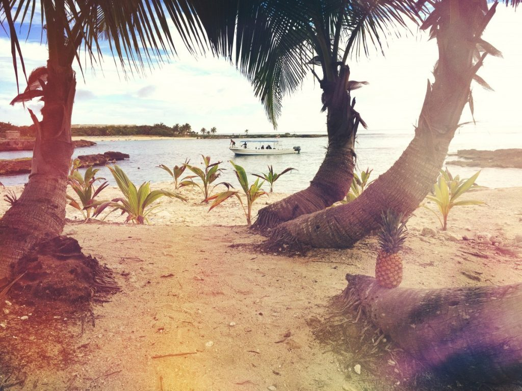 unsplash palmtrees and beach