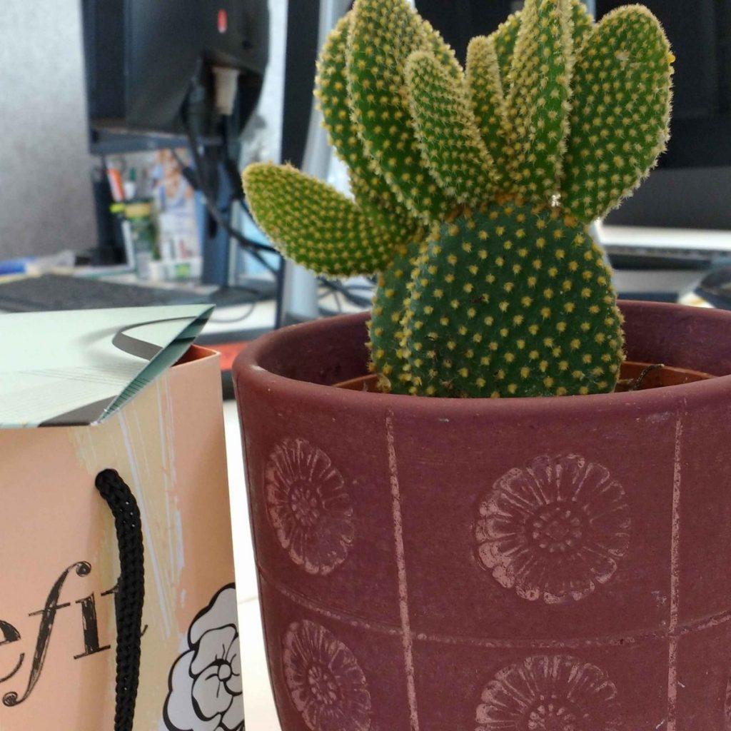 cactus birthday present