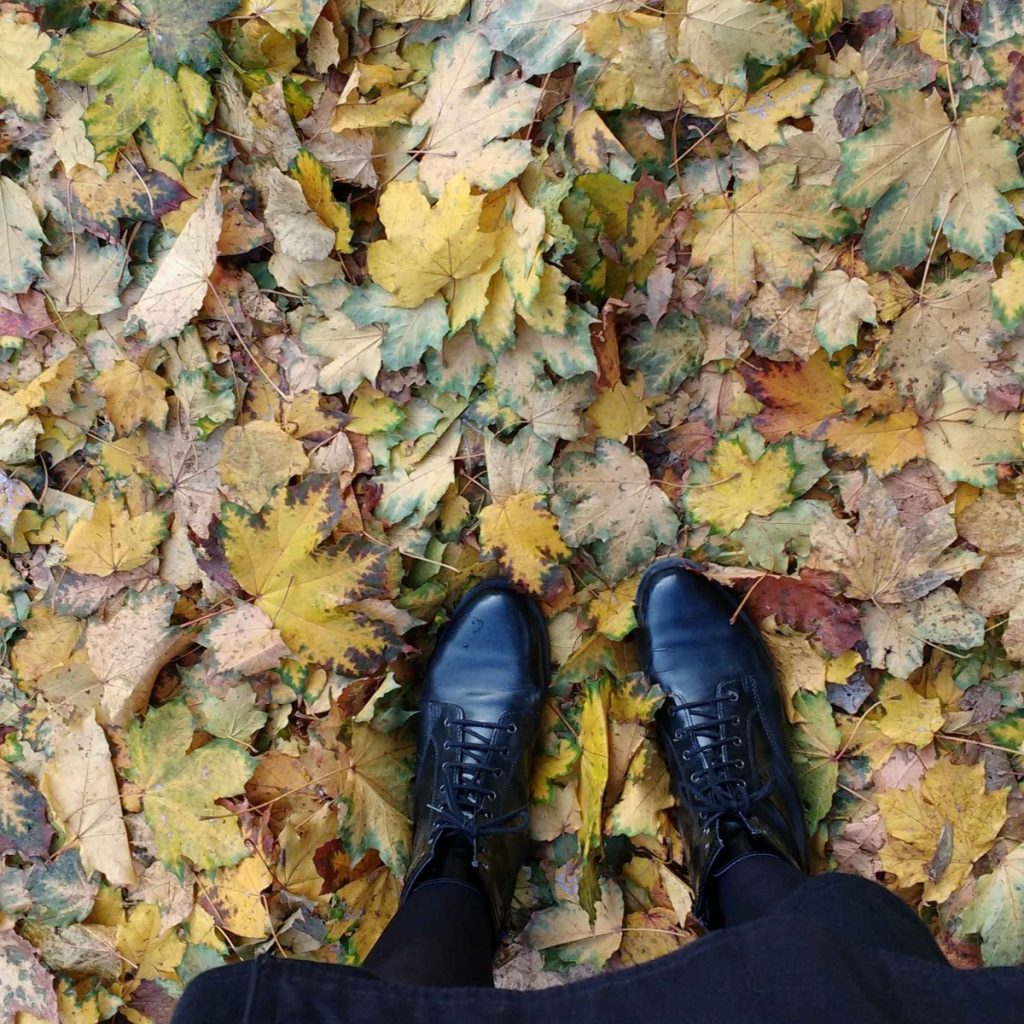 from where I stand fall leaves berlin