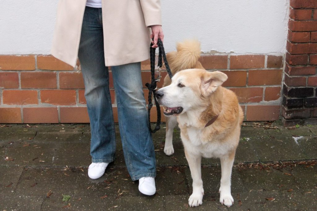 flared jeans, white sneakers and akita