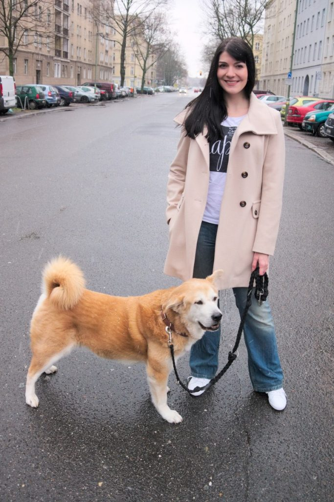 cream coat and akita