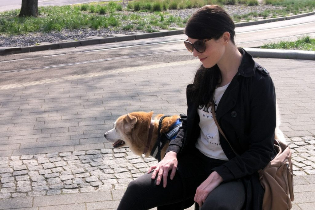 retro cat eye sunglasses and akita