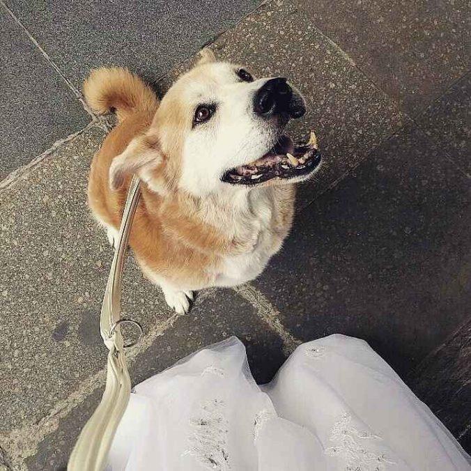 akita as best man at the wedding